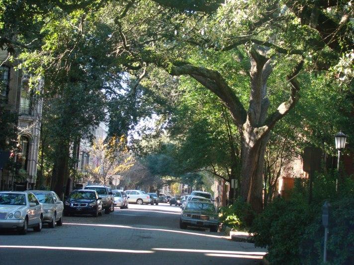 Visiones de Savannah